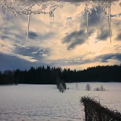 ~ icicles ~  Riddarhyttan, Sweden  iPhone 7 (Tankartartid) Tags: träd trees forest skog vinter winter landskap landsbygd landscape istappar icicles moln clouds sunset solnedgång himmel sky natur nature norden nordic västmanland riddarhyttan europe sverige sweden instagram ifttt
