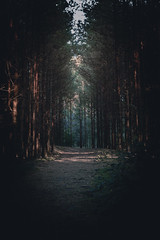 Dark Forest (ivegte) Tags: path forest pad bos soestduinen sunset dawn scary frightning netherlands holland horror tree trail wood shadows dark