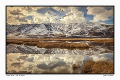 Tundra Swans ~ Off to Alberta (Johnrw1491) Tags: landscape composite nature scenery mountains lakes reflections swans art clouds textures tundra oregon alberta