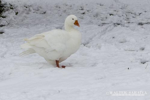 Thillay neige-13