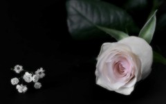 Dreamy lightness (pasquale di marzo) Tags: fiore flower rosa sfocatura interno macro aprile 2018