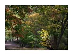 C'est beau l'automne, même au printemps! Corée (PtiteArvine) Tags: coréedusud parc forêt arbres automne couleurs