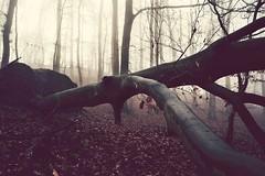 AllRoadsLeadToWhereYouAre (BphotoR) Tags: december winter forest fog nebel bphotor germany woods treetrunks road twilight
