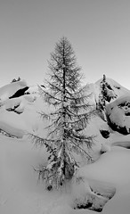 right.here (Matt_étranger) Tags: larch larici albero snow powder neve landscape nature wild winter inverno bianco nero bw black white cielo sky snowfall