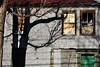 Fairfax Shadows (Flapweb) Tags: fairfax vermont tree abandoned ruin