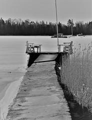 6Q3A6059 (www.ilkkajukarainen.fi) Tags: suomenoja espoo visit happy life travel traveling spring kevät suomi suomi100 finland finlande blackandwhite mustavalkoinen monocrome bird linnut laituri brygga dock pier