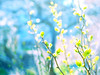 From the end spring new beginnings. (mintukka) Tags: nature spring light branches fresh bokeh green blue