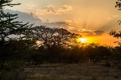 Sunset in Colombia (_Maganna) Tags: sunset colombia colombian sun rays trees nature silthuette outside outdoors nikon travel golden