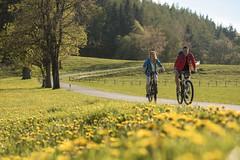 Löwenzahnwiese (Naturpark Almenland) Tags: almenland naturpark steiermark urlaub sommer sommeralm teichalm österreich oststeiermark