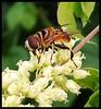 Cores da natureza. #flores #flowers #borboletas #naturalbeauty #natureza #naturephotography #jardim #floreslindas #revistaxapury #eunotg #criacaodedeus #obradivina #instaflowers #instaflores #motox2 #instamotox2 #garden #floricultura #intagram #instalike (ederrabello2014) Tags: floricultura instamotox2 bee motox2 borboletas naturephotography instalike brwildanimals3anos flowersofinstagram naturalbeauty eunotg natureza obradivina butterflyshow jardim instaflores flowers floreslindas flores revistaxapury flowerstagram flowersbouquet momentosregistrado intagram criacaodedeus brwildanimals flowerslovers instaflowers intagrambrasil garden