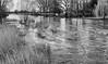 The River Stour at Spetisbury, Dorset (Julian Chilvers) Tags: dorset spetisbury landscape uk river monochrome