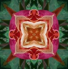 Pattern 01 (Only photoshoot, don't be afraid) Tags: bloemen macroopname flower pattern muster patroon dessin macro