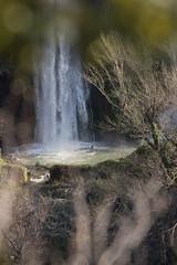 la magia della cascata (ROSSANA76 Getty Images Contributor) Tags: rossanacoviellophotos cascata acqua tivoli roma lazio italia natura paesaggio magia romantico scorcio arbusti verde schizzi alberi rami