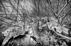 IMG_0757 (radomirmor) Tags: ice wood forest lake monochrome canon 6d