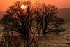 琵琶湖・湖北36・Lake Biwa (anglo10) Tags: 長浜市 滋賀県 japan lake 琵琶湖 夕景 sunset 湖