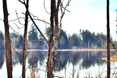 Peekaboo views (briannalhendricks) Tags: lakephotography canonrebelt6 canonrebel canon trees views lake