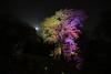 2018さくら 07 (sunuq) Tags: tokyo japan 日本 東京 canon eos 5dsr tse17mm llens 六義園 桜 ライトアップ rikugien lightup