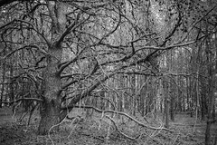 Trees (Mr. Low Notes) Tags: eosm bw blackandwhite monochrome landscape outdoors trees nature