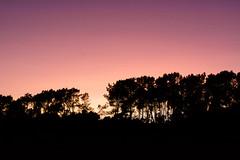 couché Breton (Rudy Pilarski) Tags: nikon tamron d7100 2470 color couleur colour coucherdesoleil tree arbre sun sunset sunrise sunlight soleil contrejour contraste nature wild voyage travel trip france bretagne europe