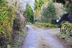 DSC_7910 (seustace2003) Tags: baile átha cliath ireland irlanda ierland irlande dublino dublin éire glencullen gleann cuilinn st patricks day lá fhéile pádraig