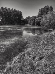 Reflections in the river (LUMEN SCRIPT) Tags: nature france loirevalley landscape countryside country water reflections mirror tree river monochrome thisphotorocks n nopeople light shadow blackwhite silhouette lumenscript w wet natural