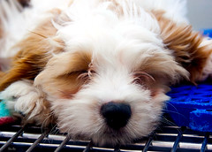 I need to stay away from Petsmart (Stu Bo) Tags: dog petsmart puppy cute sleepy sbimageworks