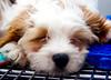 I need to stay away from Petsmart (Stu Bo) Tags: dog petsmart puppy cute sleepy sbimageworks