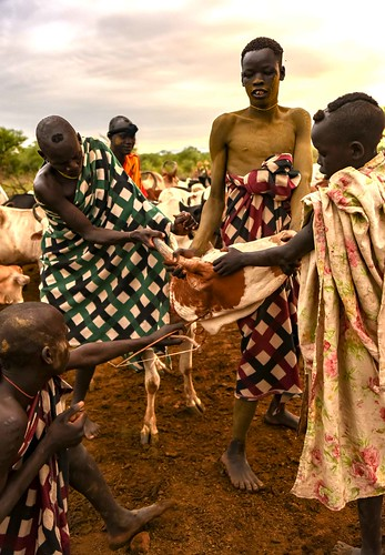 Taking Blood, Mursi Tribe