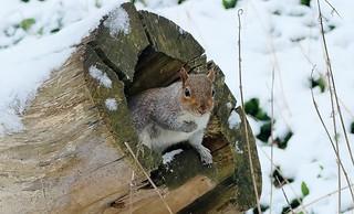 Memories of winter....