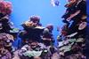 Aquarium - Palma de Mallorca, Espana (LeszekZadlo) Tags: majorka mallorca spain espania eu ue europe aquarium water blue fish turism voyage travel