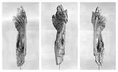 sculpture (rcfed) Tags: hasselblad film mediumformat trix rodinal stand art bw