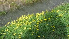 Bloemetjes aan de waterkant (Omroep Zeeland) Tags: bloemetjes aan de waterkant