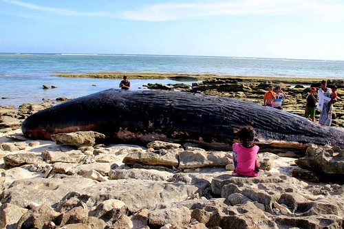 A dead sperm whale was found with 64 pounds of trash in its digestive system