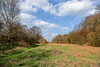 Piles Coppice 14th April 2018 (boddle (Steve Hart)) Tags: piles coppice 14th april 2018 binleywoods england unitedkingdom gb wild wilds wildlife life nature natural bird birds flowers flower fungii fungus insect insects spiders butterfly moth butterflies moths creepy crawley winter spring summer autumn seasons sunset weather sun sky cloud clouds panoramic landscape steve hart boddle steven bruce wyke road wyken coventry united kingdon great britain canon 5d mk4 6d 100400mm is usm ii 2470mm standard 85mm f14 prime