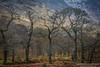 IC2A2745 (SarahMcNicholasPhotography) Tags: westofireland landscape ireland connemara mayo galway trees scenery sarahmcnicholascom photography canon 5diii