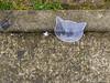 Transparent cat (Jürgen Kornstaedt) Tags: iphone asphalt 6plus colomiers occitanie frankreich fr