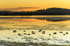 Dawn Waterscape and Bird Life (Merrillie) Tags: daybreak woywoy landscape nature australia birds foreshore newsouthwales earlymorning nsw brisbanewater pelicans bay morning dawn coastal water sky waterscape sunrise centralcoast ducks outdoors