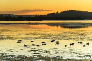 Dawn Waterscape and Bird Life