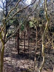 20180213002 (Leo Visser) Tags: zwolle forest winter trees vechtdal dalfsen ommen shadow sunlight februari holland netherlands wood timber bos twigs takken baum niederlande overijssel
