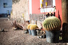 cactus in the pot.. (paul.wienerroither) Tags: cactus cacti fuerteventura island islands canaryislands travel plants street streetphotography light sun walking photography canon 50mm 5dmk3 focus dof depthoffield elcotillo