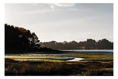 Marée basse (palomapalomino) Tags: france provia peace landscape golfedumorbihan zen color waterscapephotography fineart waterscape landscapelovers landscapehunter scapephotography brittany bretagne bzh colour