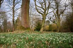 Frühling (.rog3r1) Tags: leica q hannover friedhof park spring