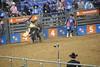 IMG_1647 (melodavis@sbcglobal.net) Tags: rodeohouston 2018 rodeo livestock heifer farmlife steer saddlebronc bronc bull bullriding calfscramble alpaca