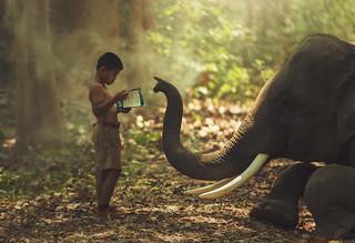 Children and elephants