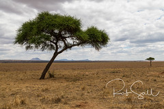 The Plains of Tanzania (robsall) Tags: 2016 24105 24105f4isusm 5dm3 5dmark3 5dmarkiii 5dmiii africa africatourism africawildlifephotography africanwildlife canon canon24105f4isusm canon24105mm canon5d canon5dmarkiii canon5dm3 canoneos canoneos5dm3 family landscape mammal robsallaeiral robsalldrone robsalldronephotography robsallphotography robsallwildlifephotography tanzania tanzania2016 vacation manyararegion