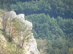 DSCN9806 (Gianluigi Roda / Photographer) Tags: apennines summer latesummer 2012 mountains woods trees rocks montegrande appenninobolognese appennino landscapes