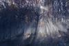 Starlight (Balthus Van Tassel) Tags: autumn autunno beech casentinesi emiliaromagna faggio fall foglie forest foresta italy lama leaves nationalpark wood