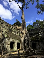 Spung Tree (oxfordblues84) Tags: cambodia kingdomofcambodia siemreap angkor angkorarcheologicalpark taprohm religioussite religiousbuilding buddhisttemple oat overseasadventuretravel unescoworldheritagesite unesco touristattraction tree khmerarchitecture building architecture blue bluesky sky clouds cloudy cloud partlycloudy famoustree stonetemple stone stonebuilding stonearchitecture 5photosaday