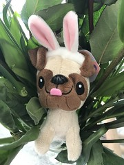 Easter pug :-) (f l a m i n g o) Tags: gift toy costume easterbunny pug
