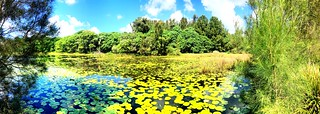 Emerald Lakes Wetlands Panorama, Gold Coast, QLD, Aus